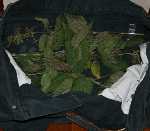 stinging nettles in her pants